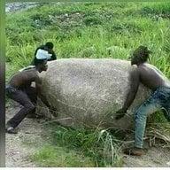 Kidume cha mbegu