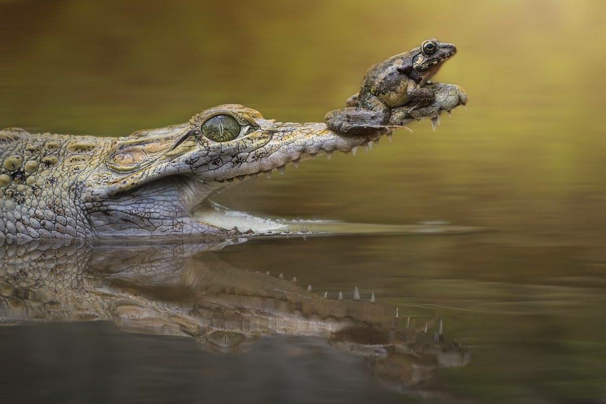 Смешные картинки с крокодилами